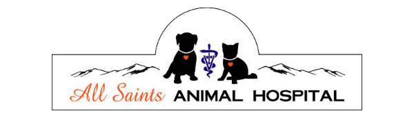 All Saints Animal Hospital